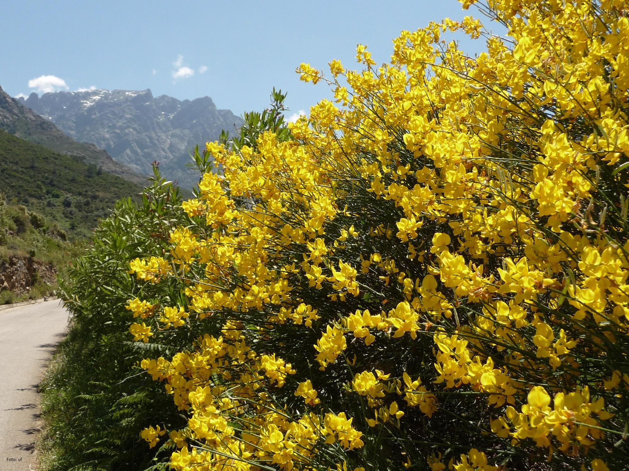 Herrliche Blüte zu unserer Reisezeit im Mai / Juni