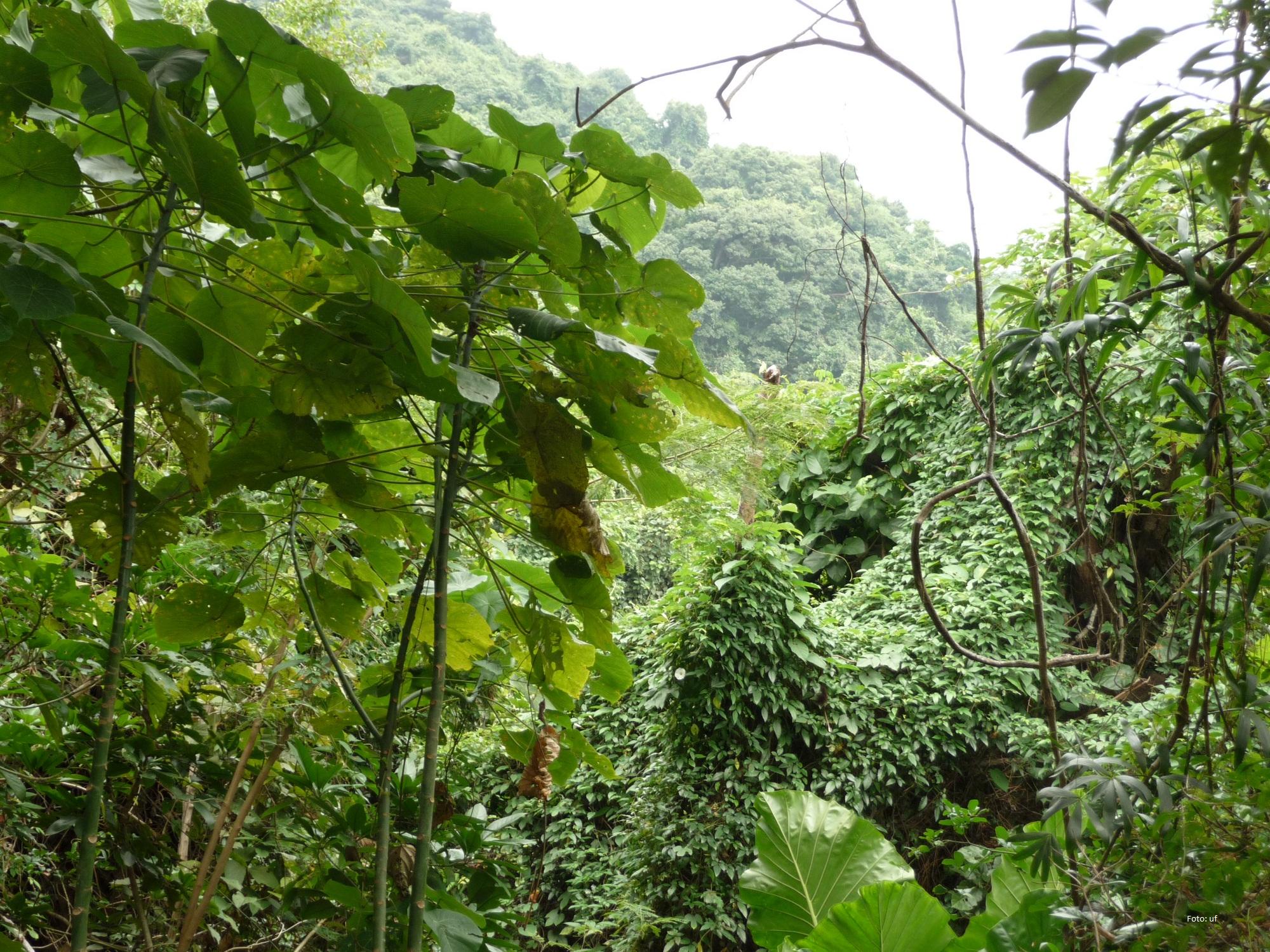 Exotische Entspannung - grüne Oasen