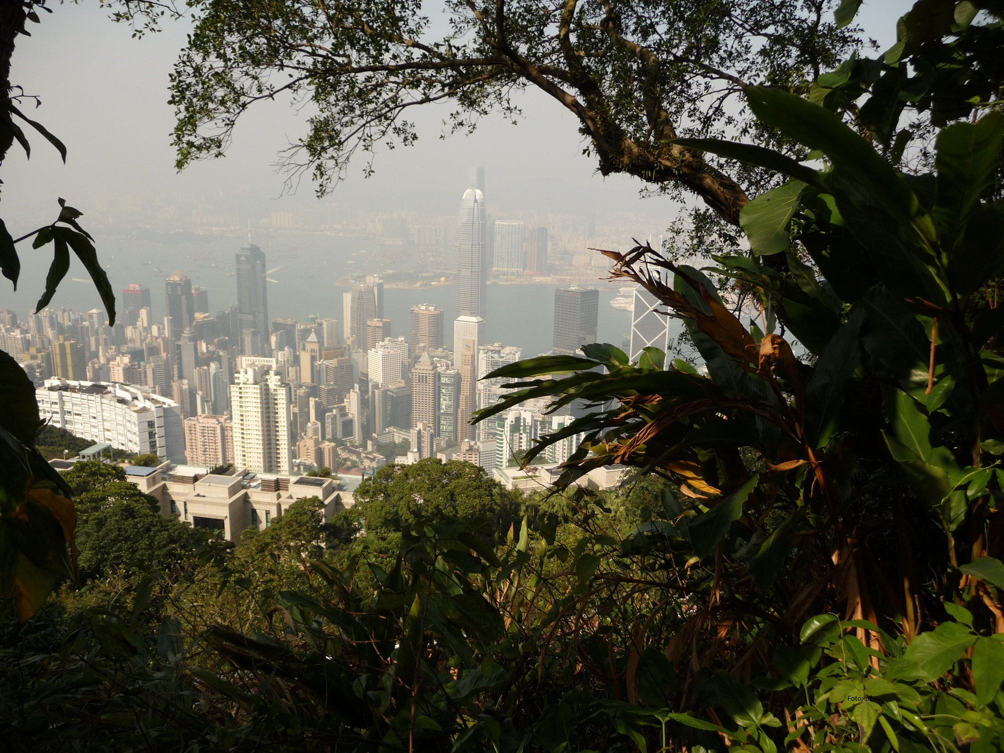 Blick durch exotische Flora auf die Stadt
