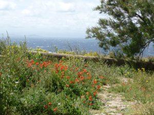 Blumenübersäte Küstenwege bei dem Plateau Le Bosco