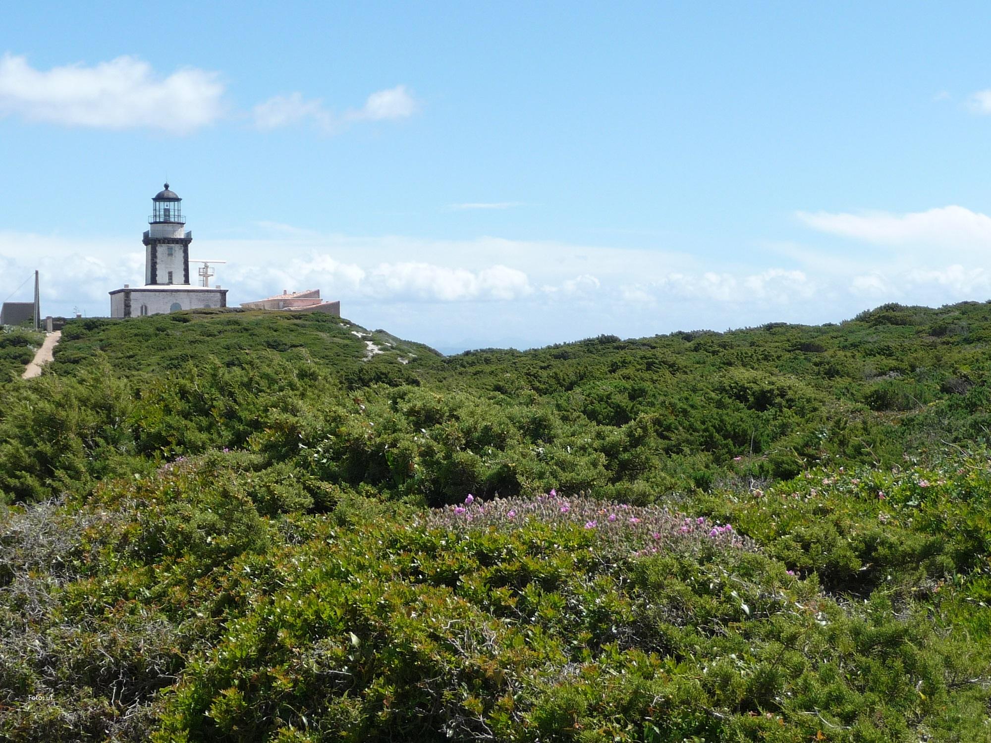 Unser Ziel einer kleinen Wanderung bei Bonifacio:der Leuchtturm von Pertusato. Die Wege für durch Macchia