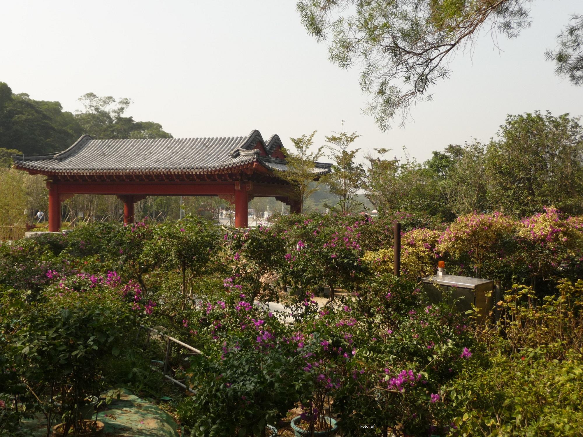Teegarten auf Lantau westlich des Buddhas - lädt sehr zur Entspannung ein