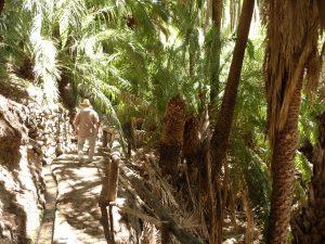 Spaziergang durch die Palmenoase bei Fataga