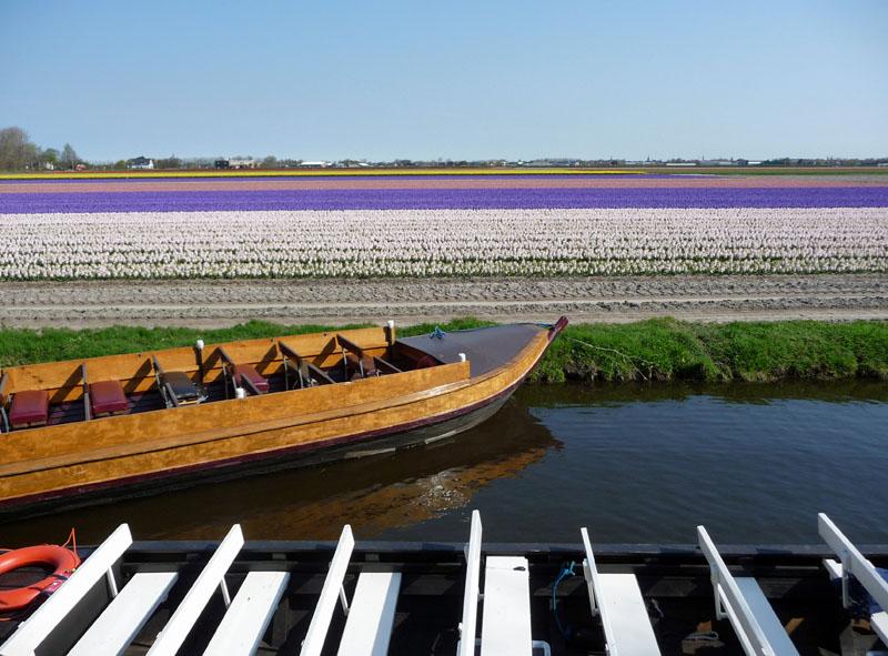 Tulpenfelder soweit das Auge reicht. Im niederländischen Lisse.