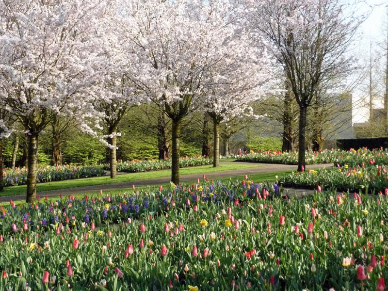 Frühling im Keukenhof (Niederlande, Lisse).