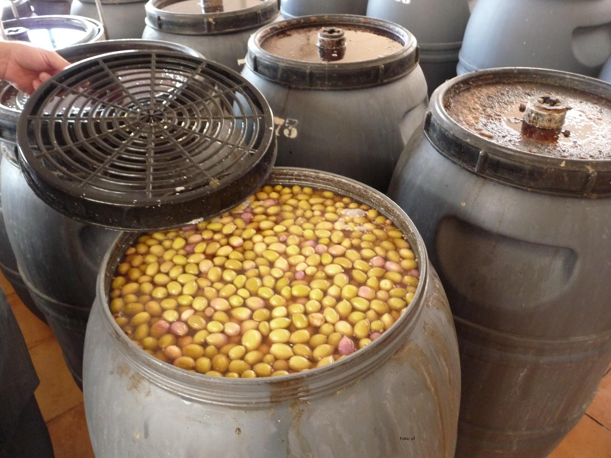 Oliven aus ökologischen Anbau