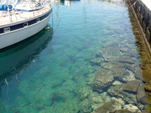 Sehr sauberes Hafenbecken in Puerto de Mogàn