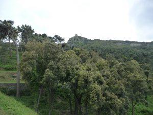 Dort wandern wir hinauf (564 m)