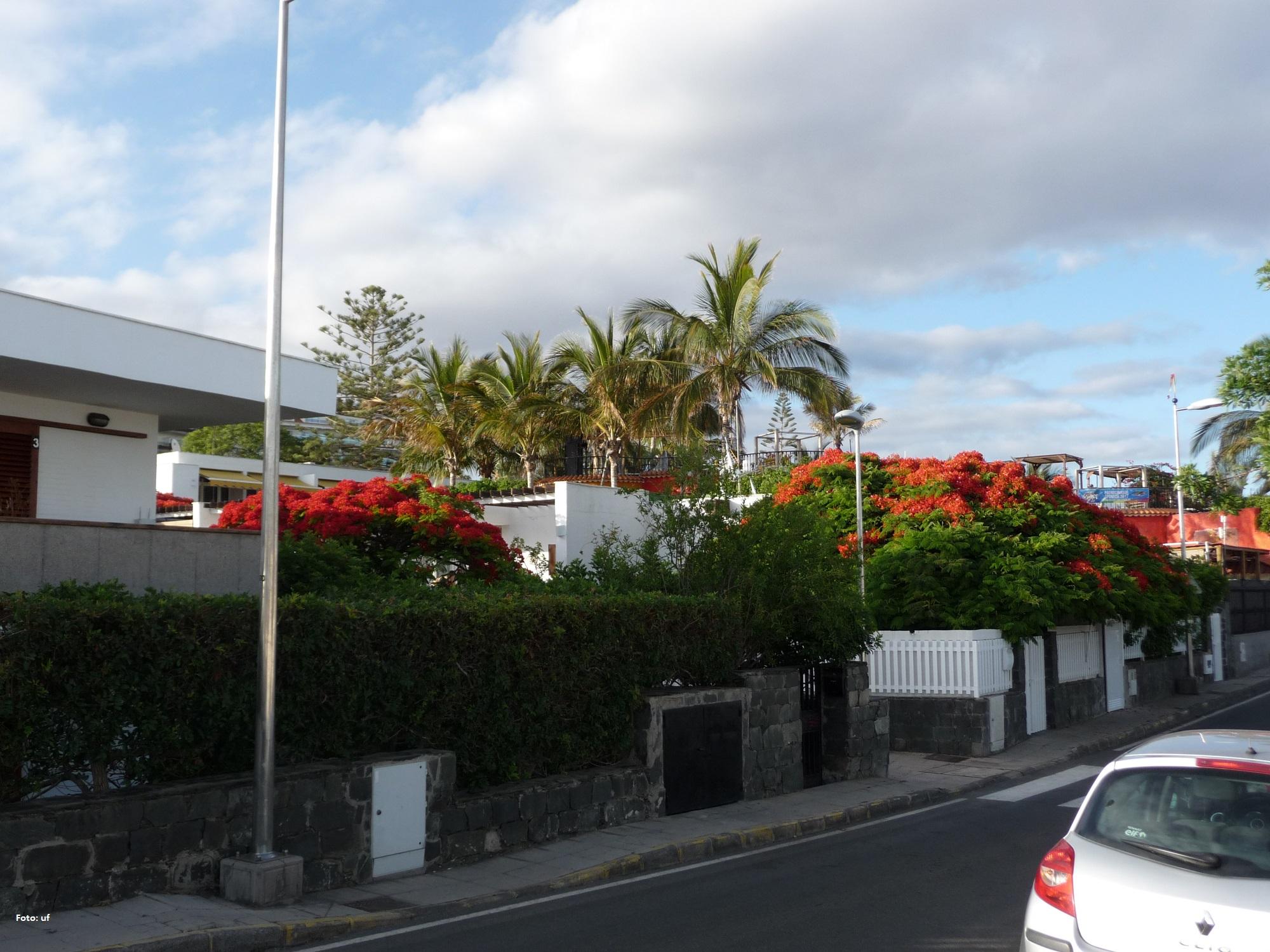Durch die Straßen von San Augustin